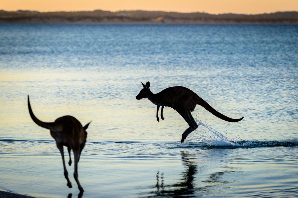 Australia Landcruiser Camping Outback Camp Gleno 4x4 Toyota Ernie Filming GXL 4WD LowRange Camera Kenno Landscape Hilux Discovery Wallaby Kangaroo Ocean Beach Coast