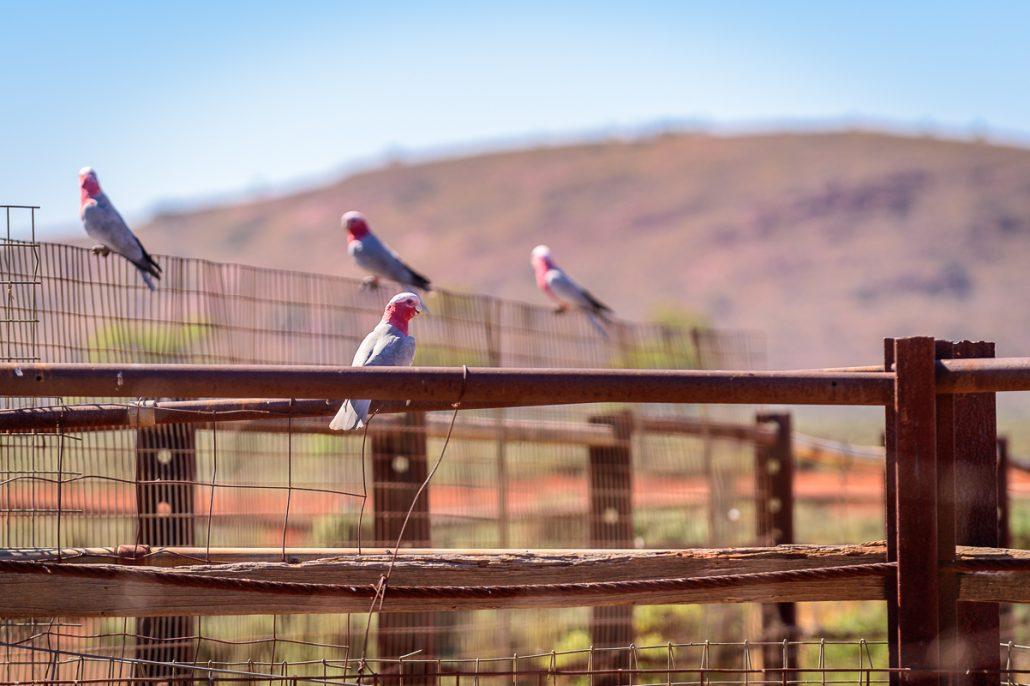 Kenno Camp Ernie Landcruiser 4WD Camping Outback GXL Landscape Australia LowRange Toyota Discovery Hilux Camera Filming Gleno 4x4